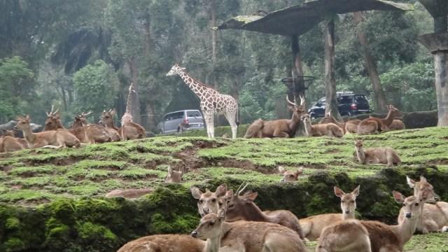 Tips Memilih Penginapan di Puncak, Bogor, Agar Liburan Makin Seru  (57855)