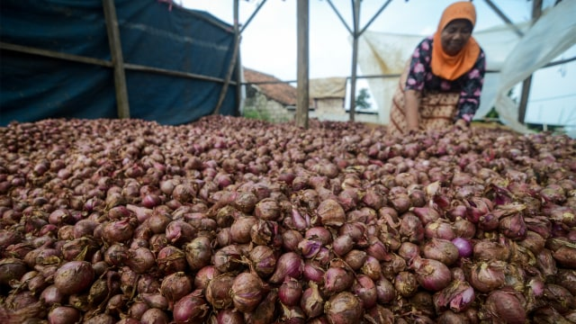 Produksi Bawang Merah Turun 30 Persen, RI Malah Naikkan Ekspor (41598)