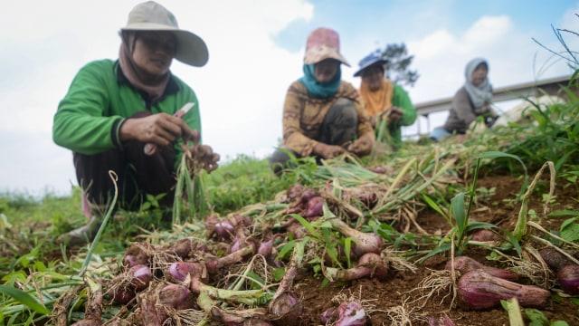 UU Cipta Kerja Diyakini Genjot Investasi Asing di Sektor Hortikultura (147850)