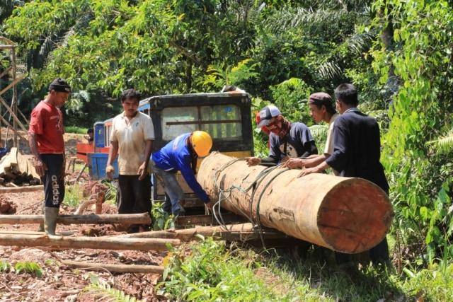 Molek dan kayu loging.jpg
