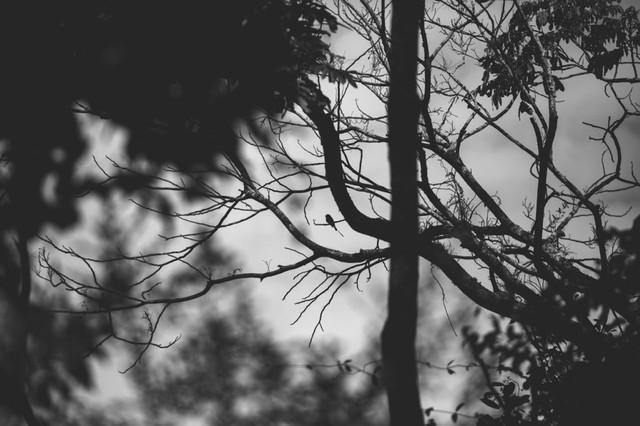 4k-wallpaper-bare-tree-black-and-white-2270178.jpg