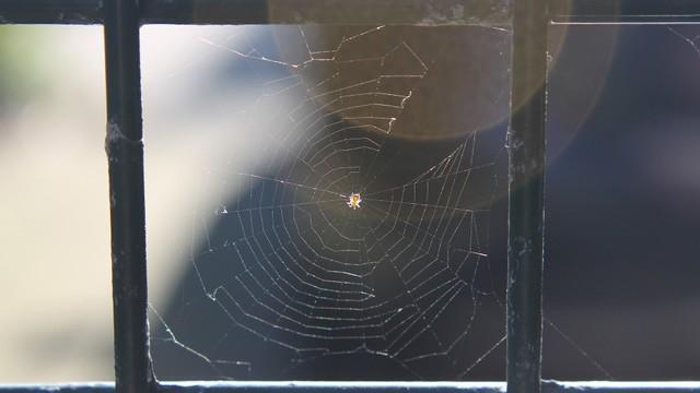 Alami Vertigo, Pria Ini Ternyata Temukan Laba-laba di Dalam Telinganya (98546)