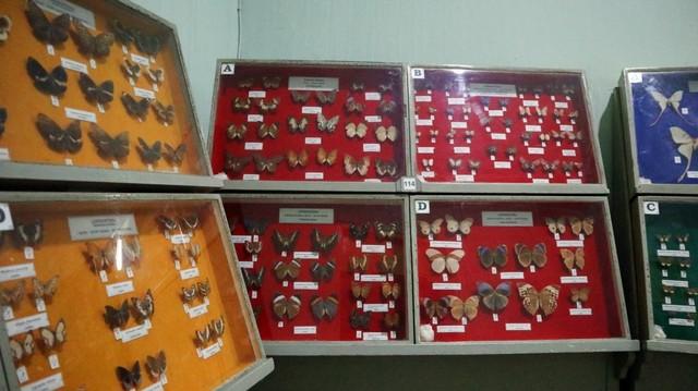 Museum Zoologi di Bogor