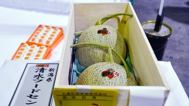 Melon Ini Dipijat dan Diberi Musik Bak Raja, Harganya Termahal di Dunia (567488)