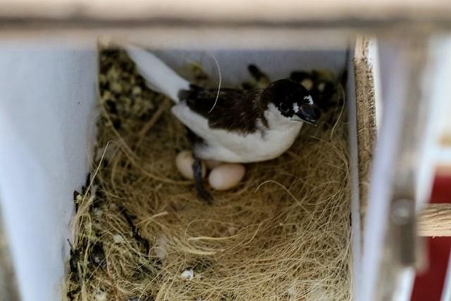 Berikut 9 Jenis Burung Finch Atau Pipit Yang Paling Digemari Di Indonesia Kumparan Com