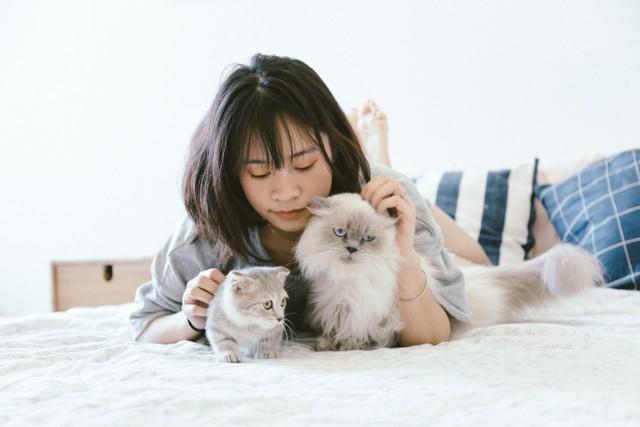 animals-bed-bedroom-2215599.jpg