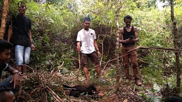 Dua Beruang Madu di Aceh Terkena Jerat Babi