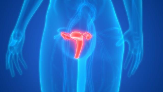 ilustrasi organ reproduksi wanita