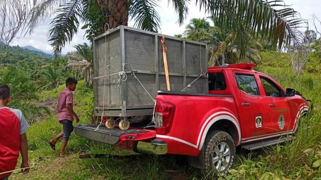 Anak Beruang Madu yang Terkena Jerat Babi di Aceh
