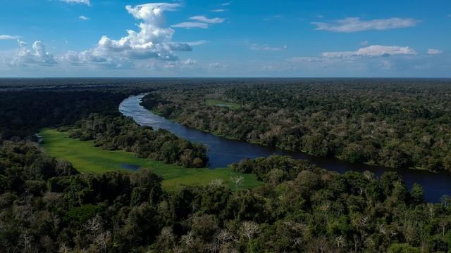 Ilustrasi Hutan Amazon