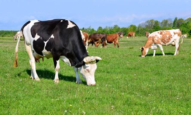 Memahami Sertifikasi Organik Pada Susu (3216)