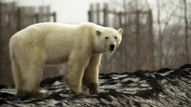 Tidur di Tenda Perkemahan, Kepala Perempuan Ini Diterkam Beruang (209875)
