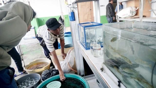 Foto: Pedagang Ikan Hias di Jatinegara Direlokasi  (14871)