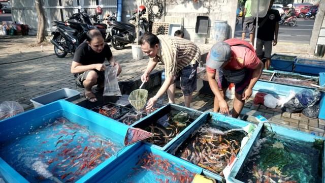 Foto: Pedagang Ikan Hias di Jatinegara Direlokasi  (14867)