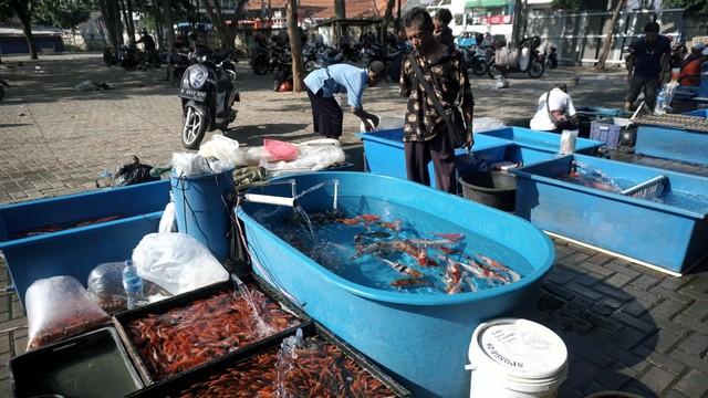 Foto: Pedagang Ikan Hias di Jatinegara Direlokasi  (14864)