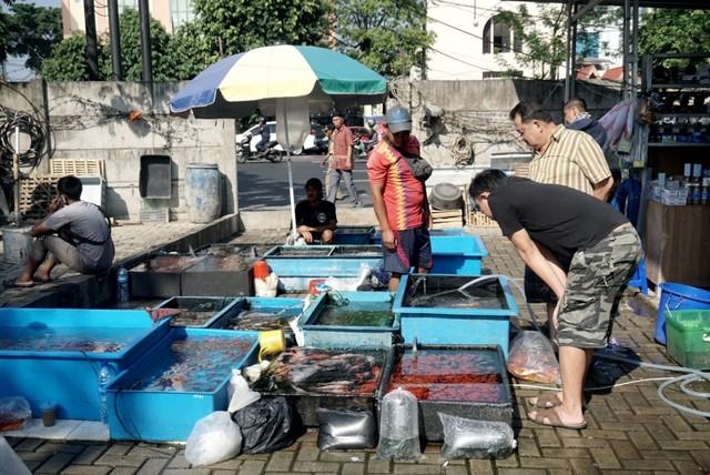 Foto: Pedagang Ikan Hias di Jatinegara Direlokasi  (14873)