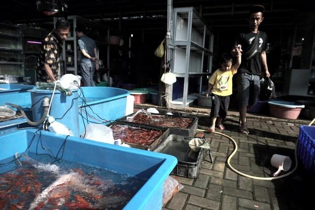 Foto: Pedagang Ikan Hias di Jatinegara Direlokasi  (14866)