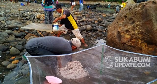 Download 5300 Koleksi Gambar Ikan Impun HD Terbaru