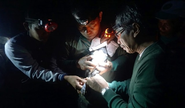 Peneliti Lepaskan Burung Maleo Bercincin untuk Kenali Kawasan Jelajah (10015)