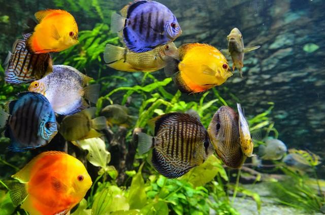 Download 450+ Gambar Ikan Hias HD Terpopuler