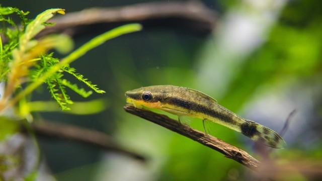 Hobi Ikan Hias yang Menjadi Rejeki (92921)