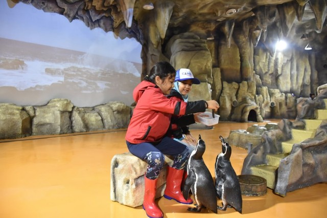 com-Memberi makan penguin di Ocean Dream Samudra Ancol