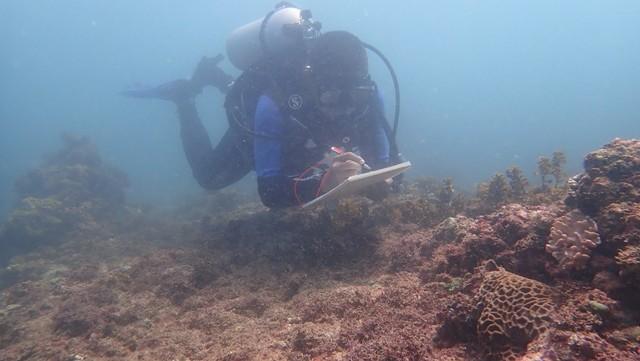 Teluk Cempi, Potensi Wisata Bawah Laut di Dompu, NTB (8945)