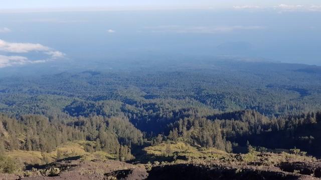 pemandangan pepohonan di bagian utara dari puncak tambora.jpg
