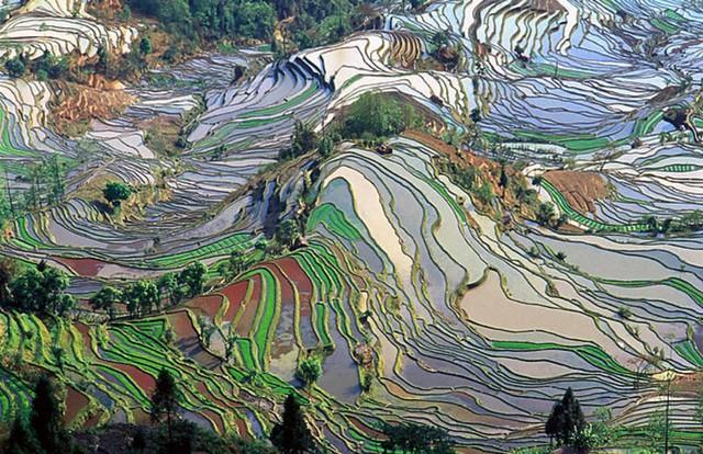640px-Terrace_field_yunnan_china_denoised.jpg