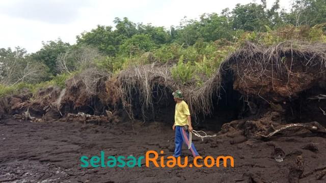 Akibat Abrasi, 4 Pulau Gambut di Riau Terancam Tenggelam (27966)
