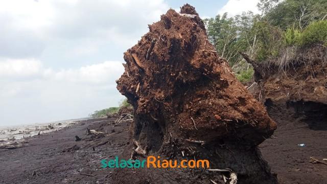 Akibat Abrasi, 4 Pulau Gambut di Riau Terancam Tenggelam (27967)