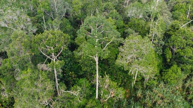 com-RER melindungi, mengkaji, merestorasi, dan mengelola hamparan hutan gambut utuh seluas dua kali Singapura.