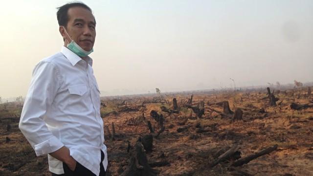 Jokowi: Perusahaan dan Individu Penyebab Karhutla Harus Ditindak Tegas (68139)