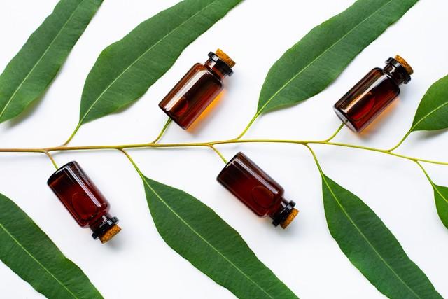 Diklaim Anti Corona, Ini 5 Manfaat Eucalyptus untuk Kesehatan Kulit dan Tubuh (233419)