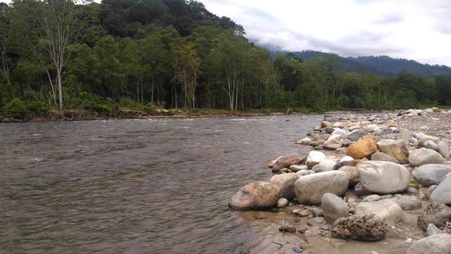 Atasi Krisis Ekologi, Jambore Nusantara Digelar di Kawasan Leuser (235541)