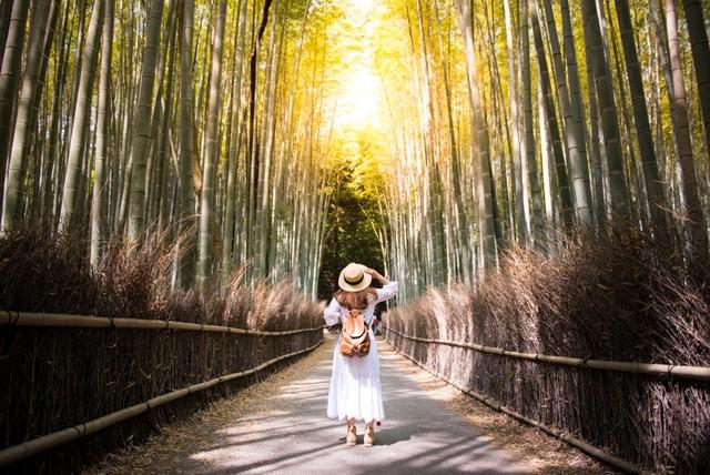 Menyusuri Arashiyama Bamboo Grove, Hutan Bambu Instagramable di Jepang (33486)