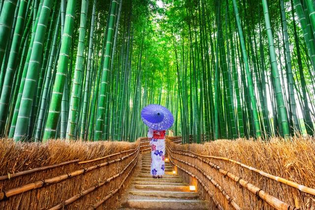 Menyusuri Arashiyama Bamboo Grove, Hutan Bambu Instagramable di Jepang (33487)