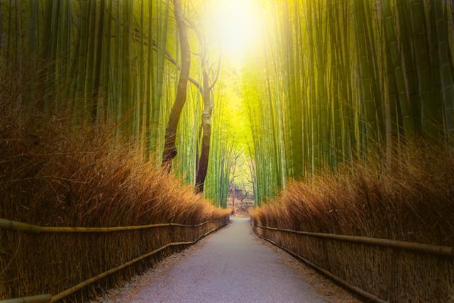 Menyusuri Arashiyama Bamboo Grove, Hutan Bambu Instagramable di Jepang (33485)