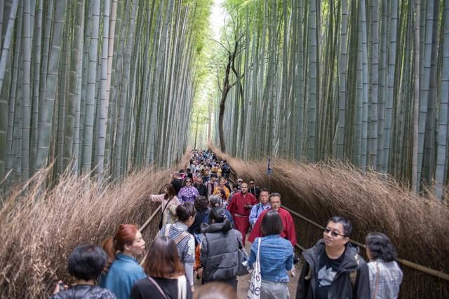 Menyusuri Arashiyama Bamboo Grove, Hutan Bambu Instagramable di Jepang (33488)