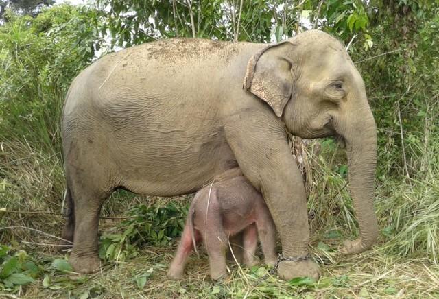 Gajah Suci2.jpeg