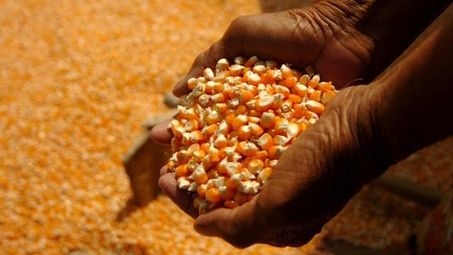Bulog Investasi Rp 200 Miliar Bangun Pabrik Pengolahan Hasil Pertanian (82743)
