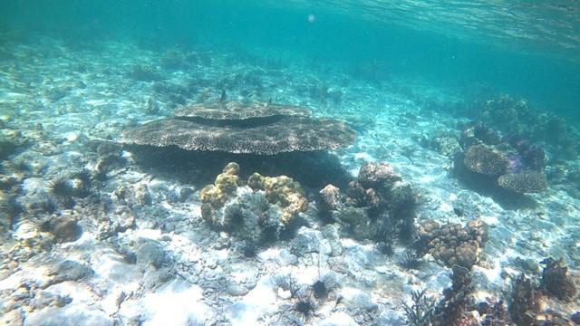 Foto: Pesona Terumbu Karang di Pulau Nisa Pudu, NTB (1093)