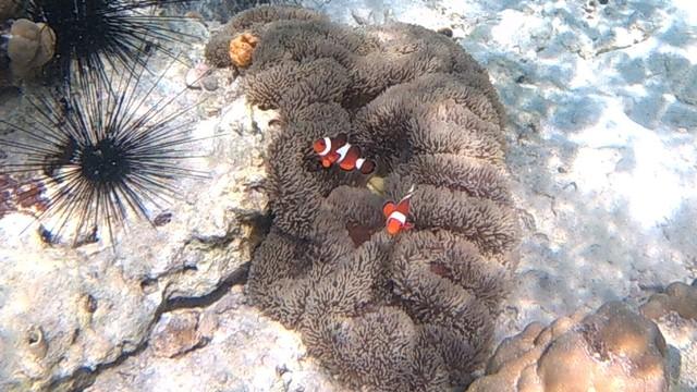 Foto: Pesona Terumbu Karang di Pulau Nisa Pudu, NTB (1097)