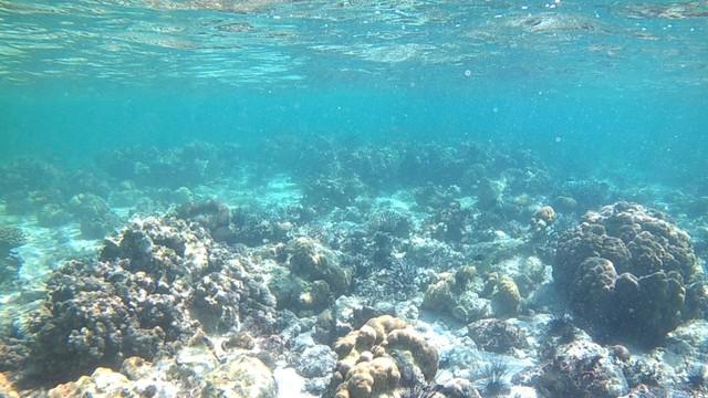Foto: Pesona Terumbu Karang di Pulau Nisa Pudu, NTB (1098)