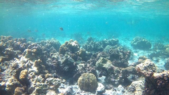 Foto: Pesona Terumbu Karang di Pulau Nisa Pudu, NTB (1100)