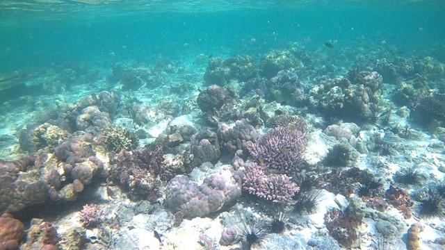 Foto: Pesona Terumbu Karang di Pulau Nisa Pudu, NTB (1102)