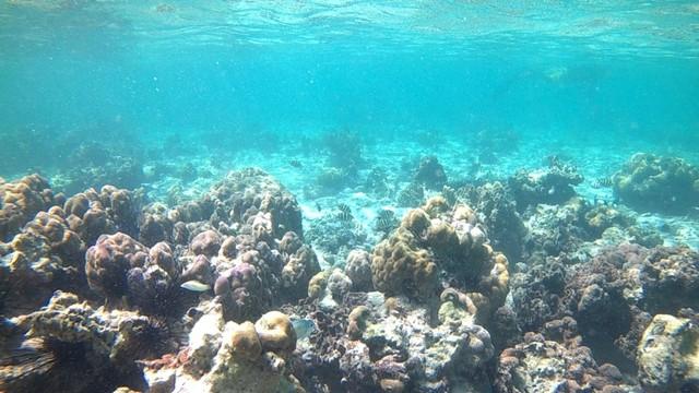 Foto: Pesona Terumbu Karang di Pulau Nisa Pudu, NTB (1103)