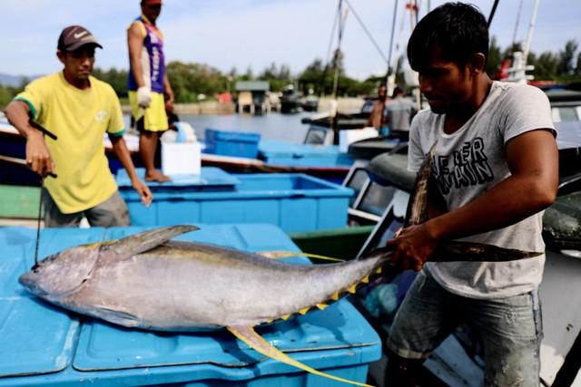 Foto: Melihat Tuna Tangkapan Nelayan Aceh yang Tembus Pasar Dunia (1056680)