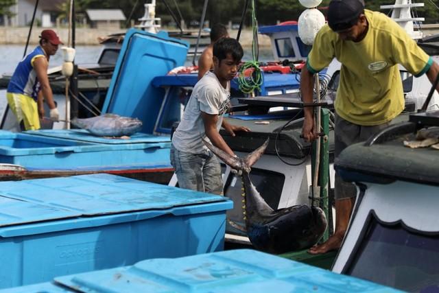 Foto: Melihat Tuna Tangkapan Nelayan Aceh yang Tembus Pasar Dunia (1056681)