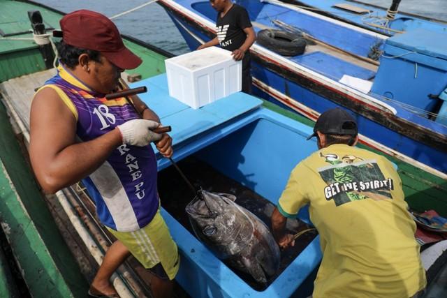 Foto: Melihat Tuna Tangkapan Nelayan Aceh yang Tembus Pasar Dunia (1056682)
